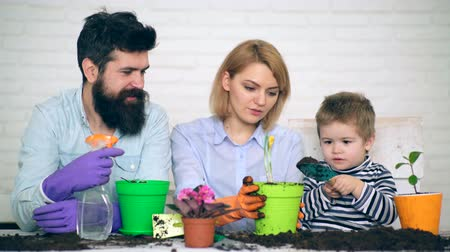 близость : Concept of collaborative work. A little boy with a shoulder blade helps parents plant flowers in pots.