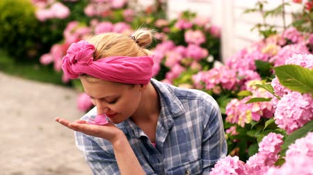 propagação : Woman care flowers. Pretty woman holds a hydrangea flower in the palm of her hand and sits near the hydrangea bushes. Vídeos