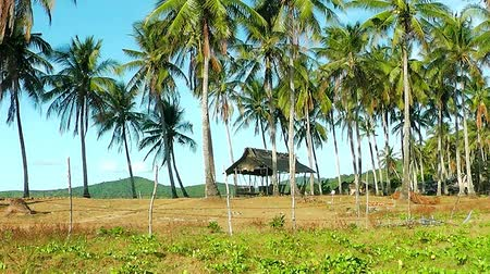 Philippine village on the beach Nacpan. El Nido. The island of Palawan. Philippines. Stok Video