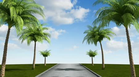 auto estrada : Road with palm trees, loop