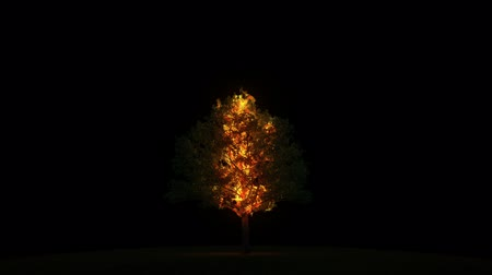 slash and burn : Burning tree with alpha