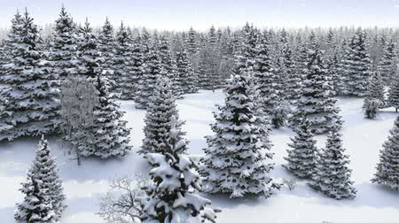 deep snow : Winter forest