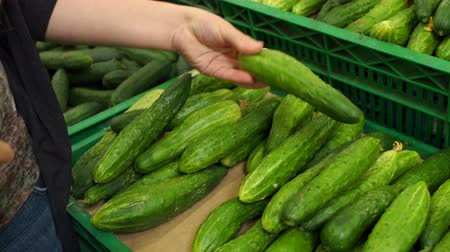 nagy felbontású : Close-up of a girl selects a cucumber at the supermarket.