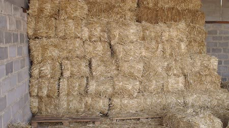 len : Large haystack in the barn on the farm. Haystacks in warehouse storage. Close-up of hay stacks. Agriculture warehouse. Haystacks in hangar. Stock mozgókép