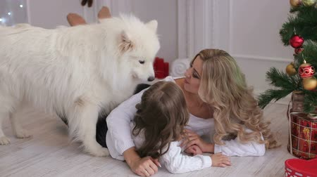 huskies : Lovely mother and child playing under a Christmas tree with a fluffy dog. Samoyed husky dog.