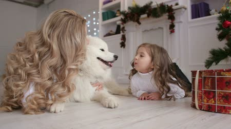samoyed : Lovely mother with long curly hair and daughter playing under a Christmas tree with a fluffy dog. Samoyed husky dog.