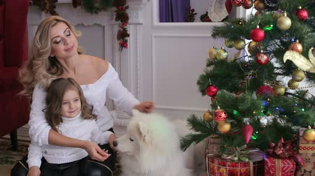 samoyed : Happy mother with her little daughter playing on the floor with the big white dog next to a decorated Christmas tree. Big happy family celebrates Christmas with a dog at home.