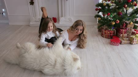 samoyed : Happy mother and little girl stroking a big fluffy dog sitting on the floor near the Christmas tree. Stock Footage