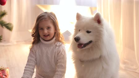 samoyed : Portrait of a cute little girl with a fluffy white dog in the evening near the Christmas tree. Stock Footage