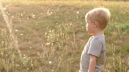 pampeliška : Close-up of little boy blowing on dandelion in the summer in the Park at sunset, slow motion. Portrait of a little boy in denim shorts and a gray t-shirt with dandelion summer in the Park.