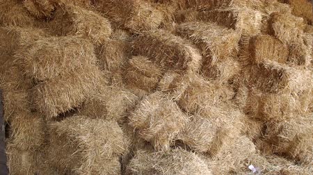 hay pile : Large haystack in the barn on the farm. Haystacks in warehouse storage. Close-up of hay stacks. Agriculture warehouse. Haystacks in hangar. Stock Footage