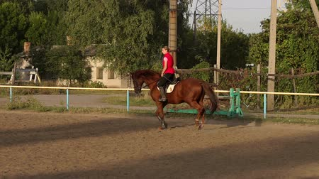 pista de corridas : Young Caucasian girl riding on a brown horse engaged in horseback riding at sunset.