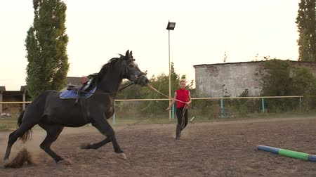 klusat : Female rider trains a horse at a racetrack holding her by the reins. Slow motion. Woman hold horse on leash while running in circle. Training a horse. Dostupné videozáznamy