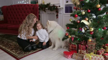 samoyed : Happy family with dog, mother and daughter, on the eve of new year and Christmas holidays playing and having fun at home
