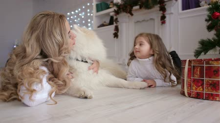 samoyed : A happy mother and her little daughter are lying on the floor next to a white dog on the background of a Christmas interior. Dog husky Samoyed.