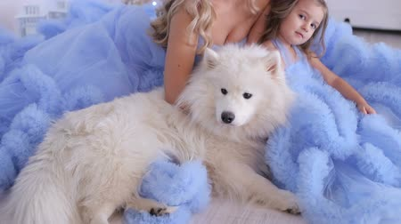 samoyed : Beautiful mother and her daughter dressed in the same blue fluffy dresses, they sitting on the floor next to them sits a dog husky. Stock Footage