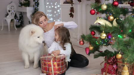 samoyed : Happy mother and little daughter with a dog sit in an embrace near the Christmas tree, they open Christmas presents. Stock Footage