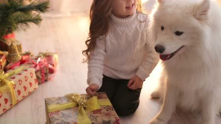 samoyed : A little cute girl plays with her dog in the evening near the Christmas tree. A small child with a dog and Christmas gifts near the Christmas tree.