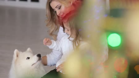 samoyed : Happy mom and daughter are sitting near a decorated Christmas tree with a fluffy white dog. Portrait of a family at Christmas. Stock Footage
