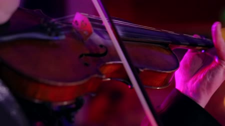 skladatel : Musician playing violin. Close-up male musician playing violin on dark background with colorful lights.