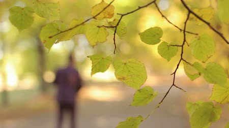 focus on foreground : Blurred image of a young man in a suit walking through the autumn Park, in the foreground of a tree branch with yellow leaves. Stock Footage