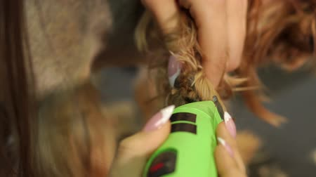penteado : Veterinarian cuts hair on paws of a Yorkshire terrier with a clipper, close-up. Female groomer haircut Yorkshire Terrier on the table for grooming in the beauty salon for dogs.