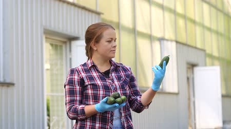 цуккини : A female gardener in blue gloves is holding fresh cucumbers on a greenhouse background on a rural farm. Harvesting. Organic vegetables grown in greenhouses.