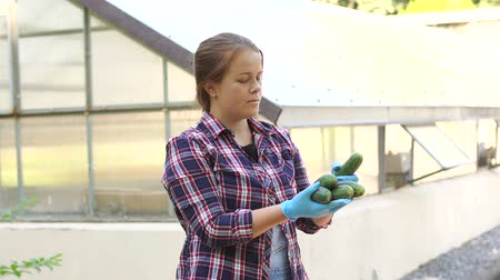 цуккини : Portrait beautiful female farmer in blue gloves holds a cucumbers harvest. Cucumbers harvest in the hands of a woman farmer on the background of the greenhouse. Gardening and agriculture concept. Стоковые видеозаписи