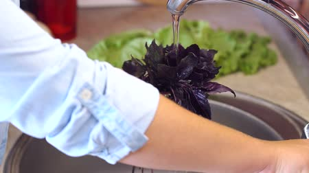 kuşkonmaz : Close-up of a woman washing red Basil, lettuce and vegetables in the kitchen sink at home. Slow motion.
