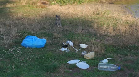 voluntário : A stray cat sits on the grass in a garbage dump on the river Bank. A lot of plastic garbage in the Park on the grass. Environmental damage. Plastic pollution concept. Environmental pollution. Stock Footage