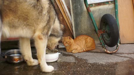 Cat watching dog eating food.