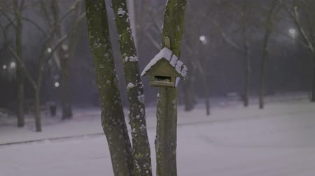 Birds house in the snow Stock Footage