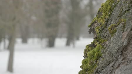 Tree in the meadow in snow during winter Stock Footage