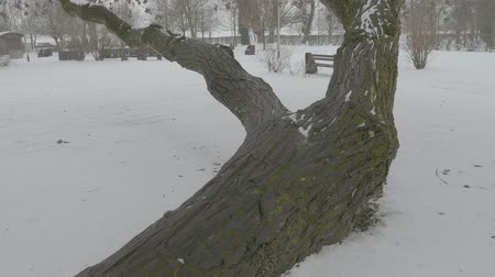 Tree in the park under the snow
