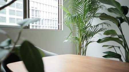 shaking wind : light room with a houseplant