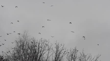 uçan : A flock of crows flying away from the silhouette of a lone tree