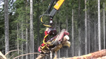timberland : A harvester is a type of heavy forestry vehicle used in cut-to-length logging operations for felling, delimbing and bucking trees. Stock Footage