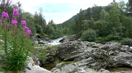 augusto : River space near the town of Bjorli in Oppland, Norway. Stock Footage