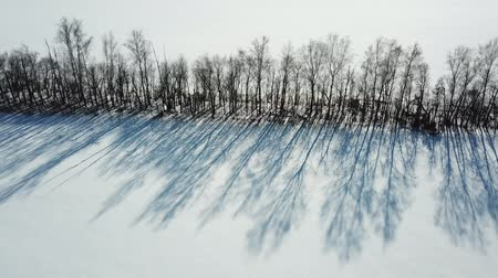 Row of trees with bare branches and shadow. Aerial view winter landscape Стоковые видеозаписи