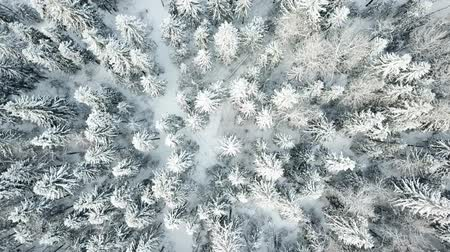 Spinning over the winter forest. Aerial view landscape.