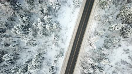 ladin : Road throw winter forest