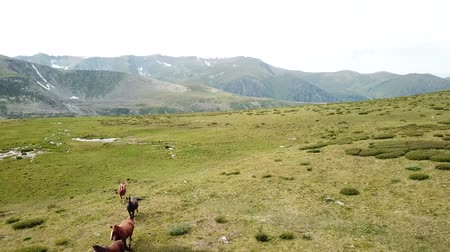 A herd of horses in the pasture. Altai mountains landscape Стоковые видеозаписи