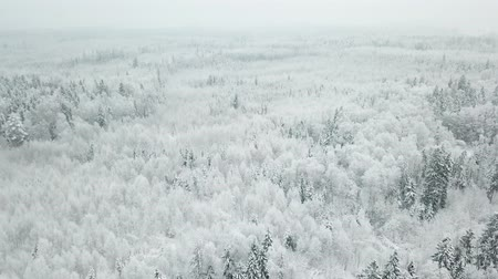 Flying over the winter forest. Aerial view landscape.