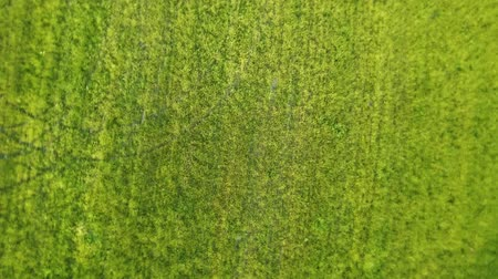 Flying over a field of green grass. Top view