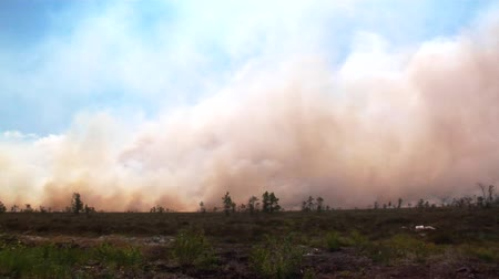 destruir : Forest in fire, burning trees, bushs, burning dry grass in the peatbog. Heavy smoke against sky.