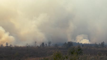 aftermath : Forest in fire, burning trees, bushs, burning dry grass in the peatbog. Heavy smoke against sky.