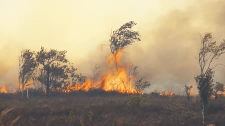 esőerdő : Forest in Fire, Burning Trees, Bushs, Burning Dry Grass in the Peatbog.