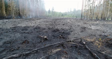 hot news : Forest in Fire, Burning Trees, Bushs, Burning Dry Grass in the Peatbog. Heavy Smoke Against Sky.
