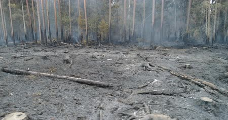 erozyon : Forest in Fire, Burning Trees, Bushs, Burning Dry Grass in the Peatbog. Heavy Smoke Against Sky.