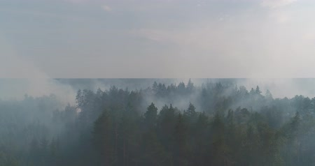 erozyon : Forest in Fire, Burning Trees, Bushs, Burning Dry Grass in the Peatbog. Heavy Smoke Against Sky. Dron Shoot.
